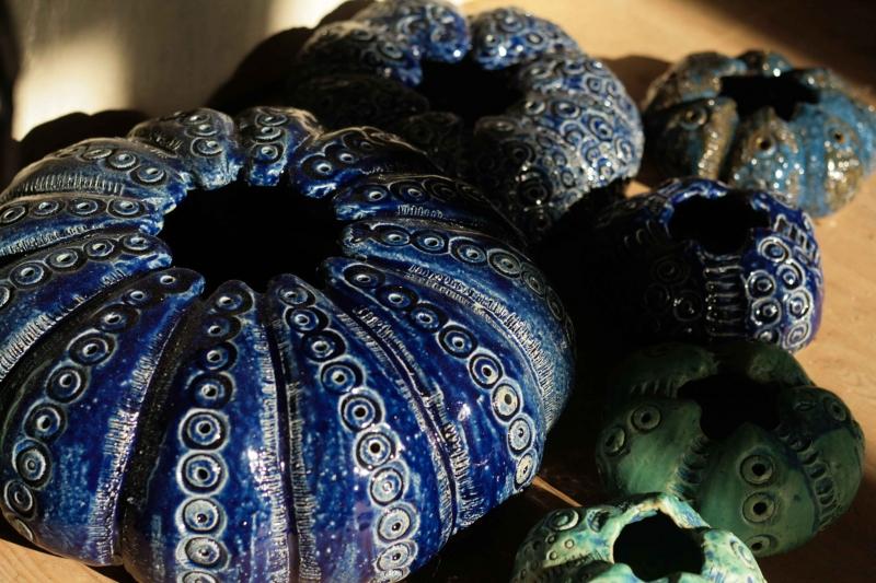 blå søpindsvin