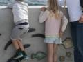 keramikfisk til skovshoved havn